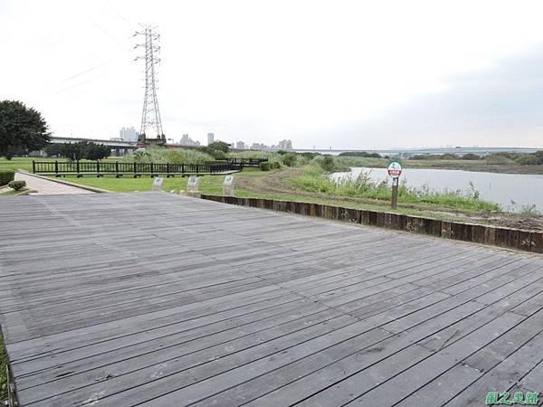華江雁鴨自然公園2014122(57)
