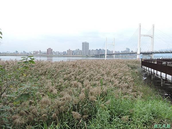 新北河濱車道20141220(1)