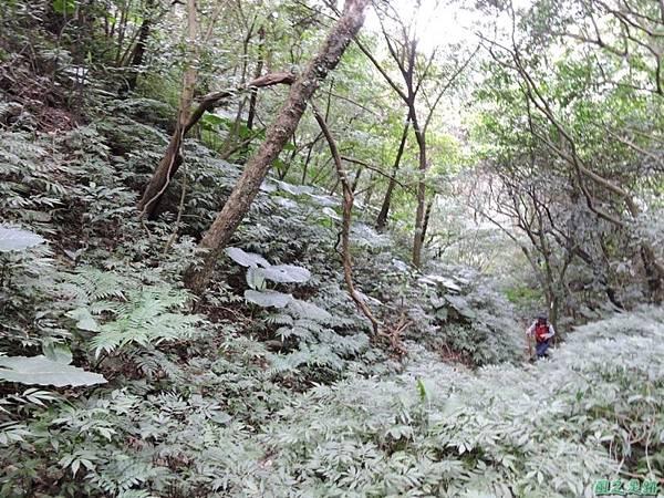 八斗山行20150102(25)