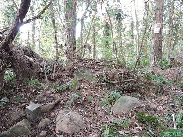 獅潭東坑山20150103(45)