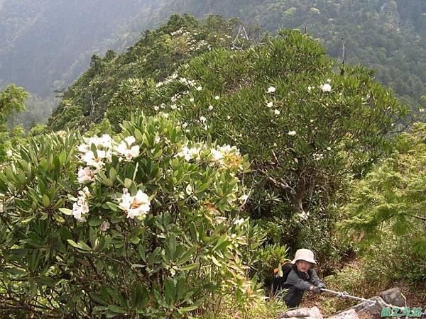 復興尖山20060422(37)
