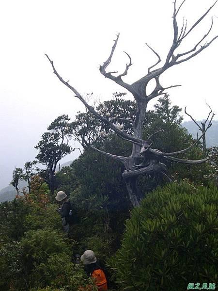 復興尖山20060422(40)