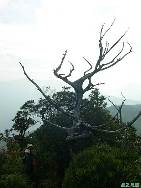 復興尖山20060422(41)