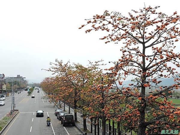 木棉花20150307(26)