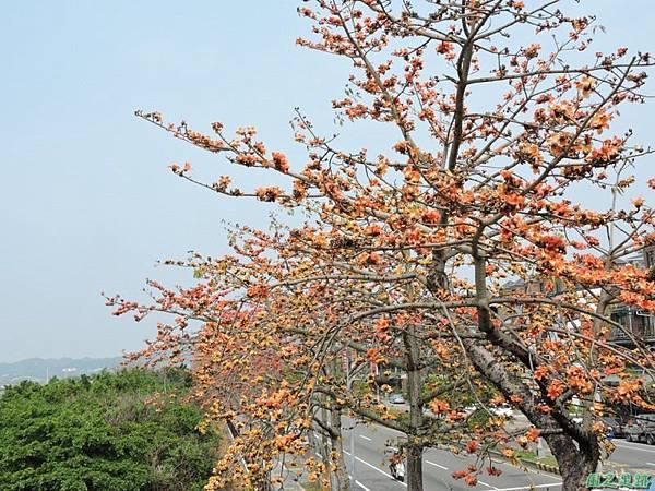 木棉花20150307(29)