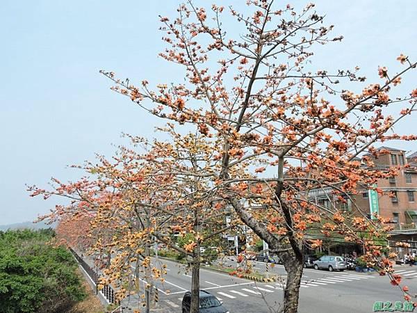 木棉花20150307(30)