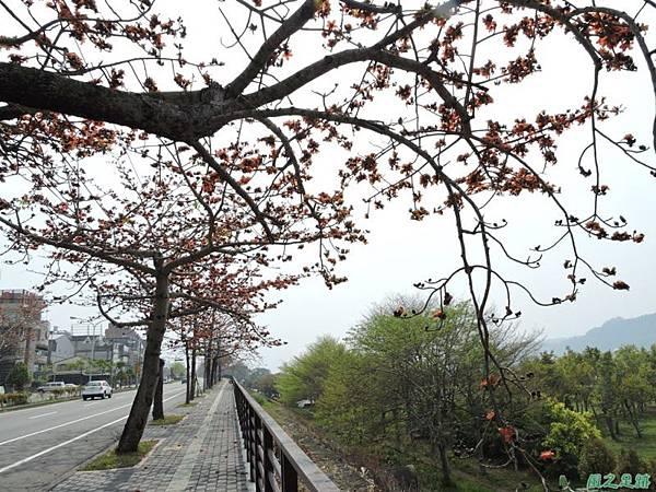 木棉花20150314(17)