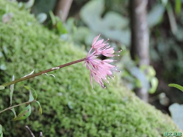 台灣胡麻花20150221(8)