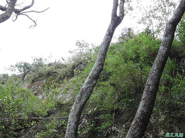 白石山20150812(57)