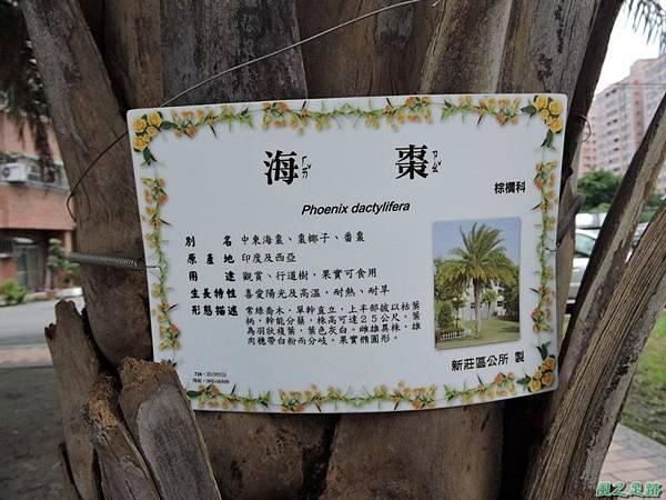 領角鴞20150824(34)