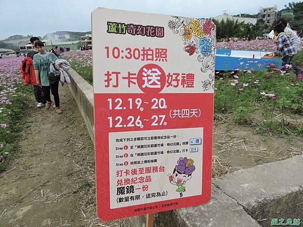 蘆竹花彩節20151220(13).JPG
