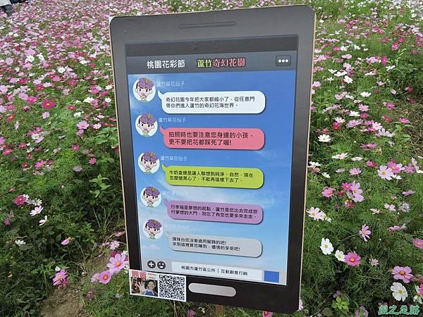 蘆竹花彩節20151220(57).JPG