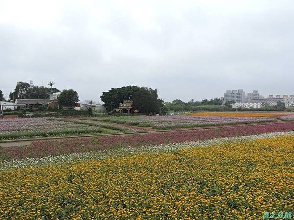 平鎮花彩節20151221(11)