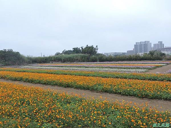 平鎮花彩節20151221(53)