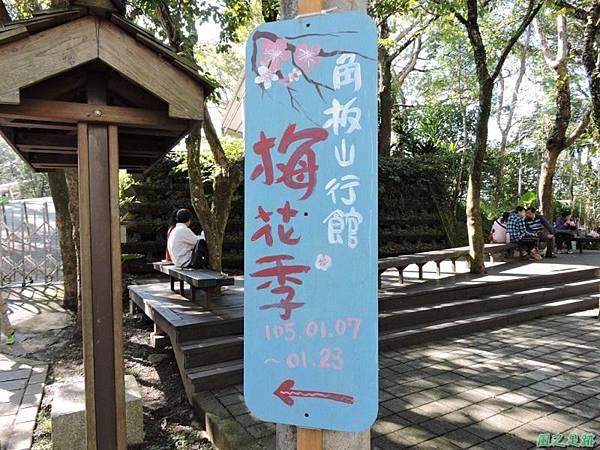 角板山梅花季20160116(3)
