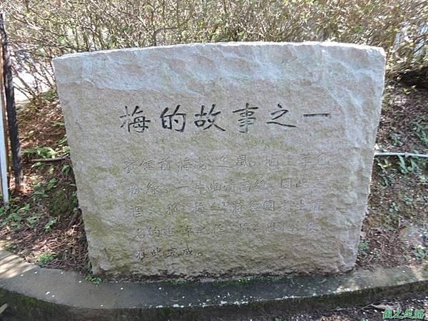 角板山梅花季20160116(7)