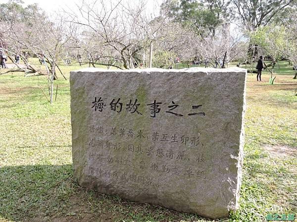 角板山梅花季20160116(32)