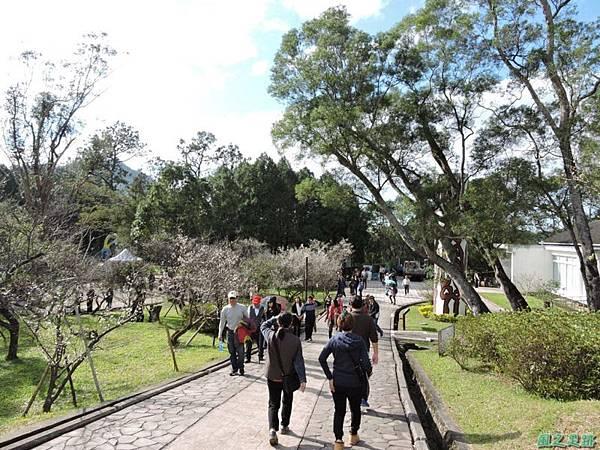 角板山梅花季20160116(37)