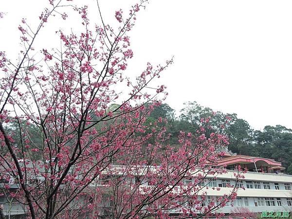 協雲宮20160220(35)