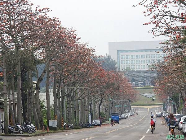 央大木棉道20170411(3)