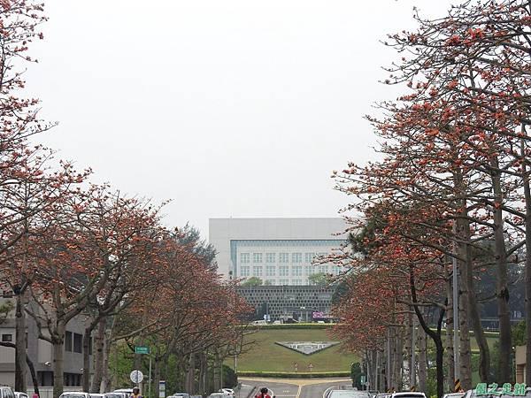 央大木棉道20170411(15)