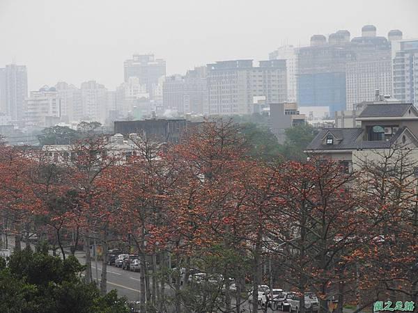 央大木棉道20170411(28)