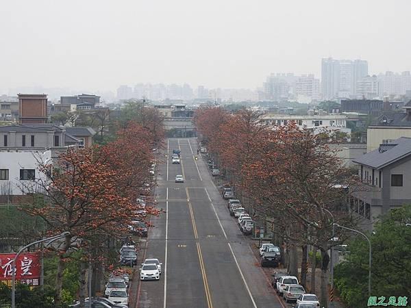 央大木棉道20170411(29)