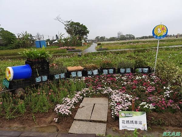 桃園彩色海芋節20170411(3)