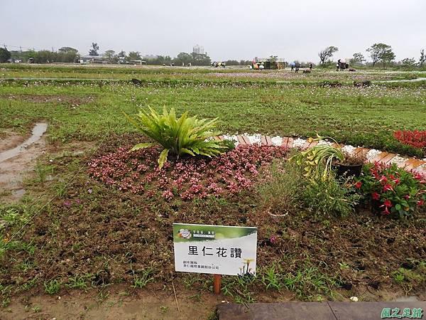 桃園彩色海芋節20170411(7)