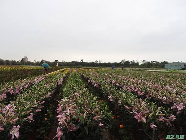 桃園彩色海芋節20170411(15)