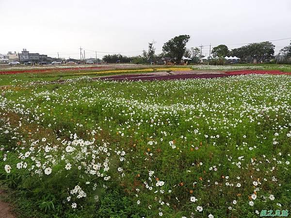 桃園彩色海芋節20170411(28)