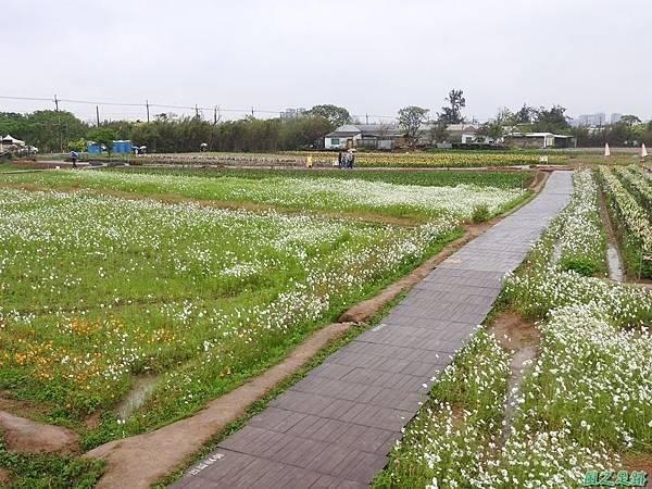 桃園彩色海芋節20170411(34)