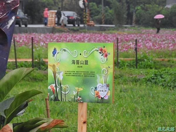桃園彩色海芋節20170411(57)