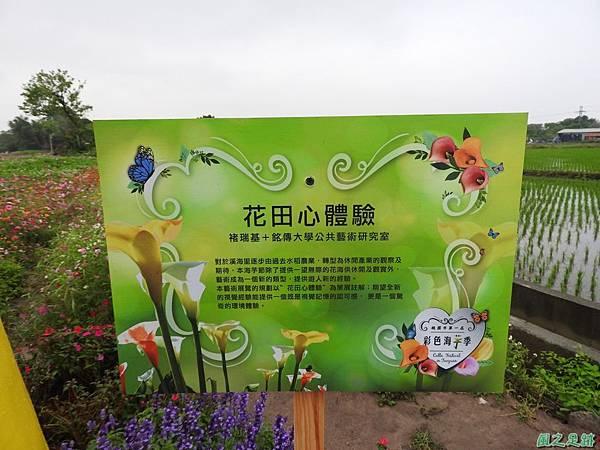 桃園彩色海芋節20170411(61)