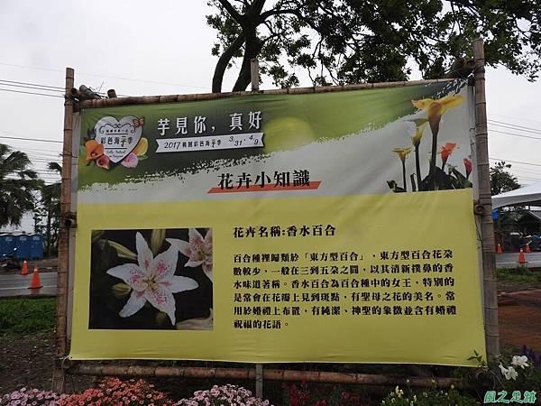 桃園彩色海芋節20170411(74)