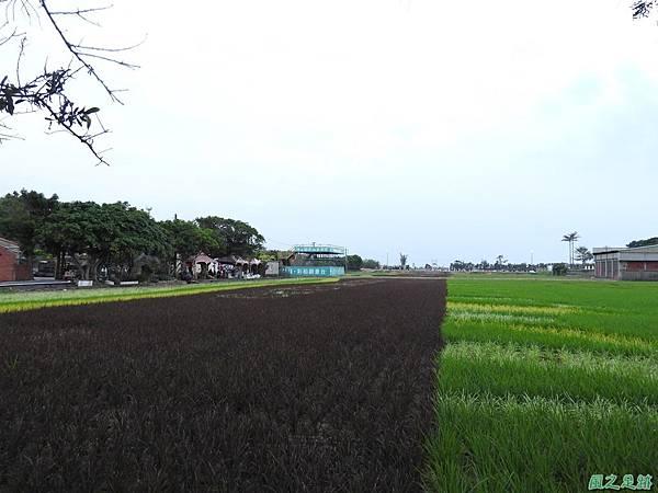 桃園農博會20170501(38)