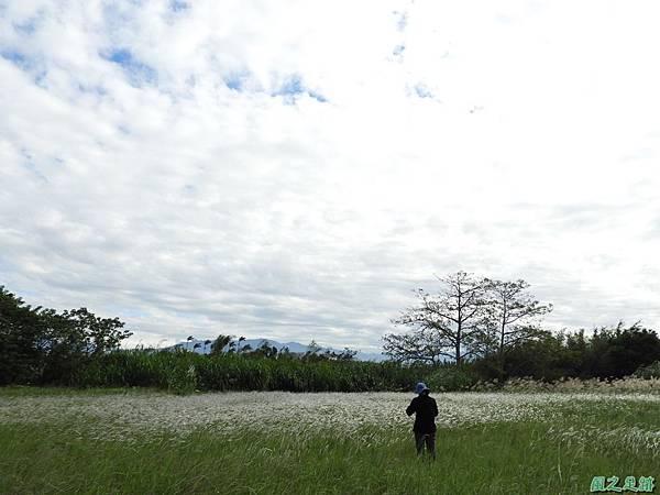 白茅草20171127(2)