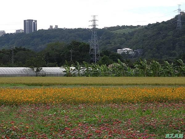 花彩節大溪場區20171127(9)