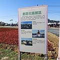 桃園彩芋季20180310(49)