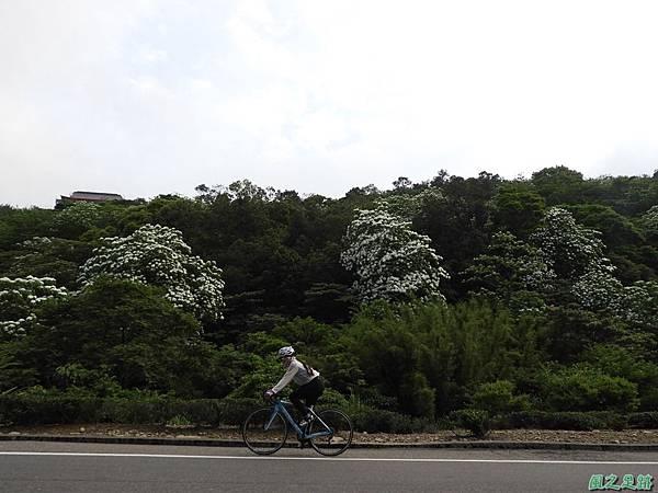 楊銅路賞桐20180501(10)