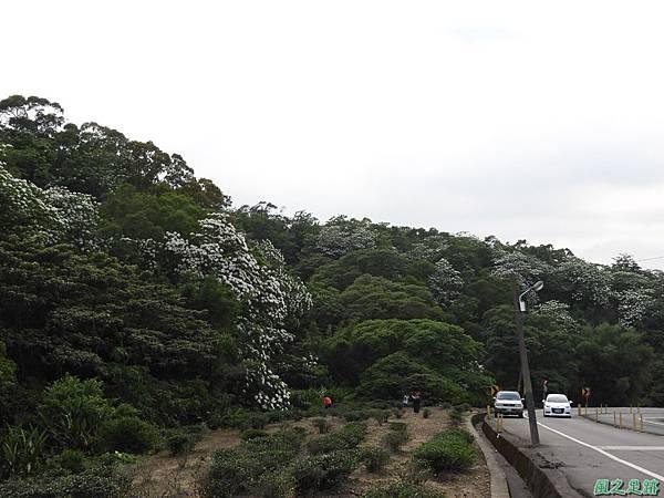 楊銅路賞桐20180501(29)