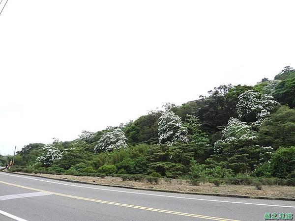 楊銅路賞桐20180501(32)