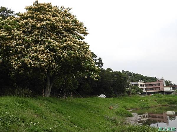 加羅林魚木20180506(20)