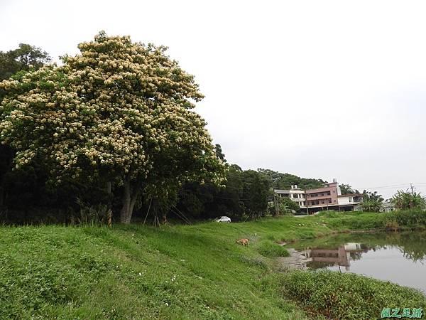 加羅林魚木20180506(22)