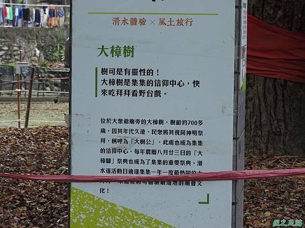 集集大樟樹20170415(18)