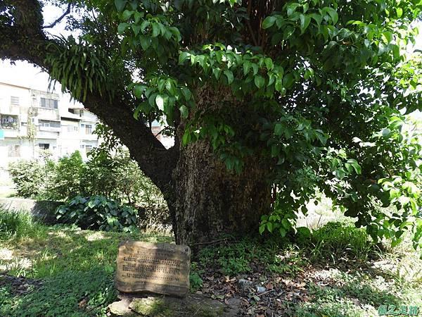 埔里愛蘭老樹20170916(5)