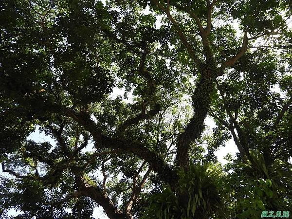 埔里愛蘭老樹20170916(8)
