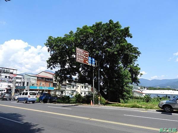 埔里愛蘭老樹20170916(15)