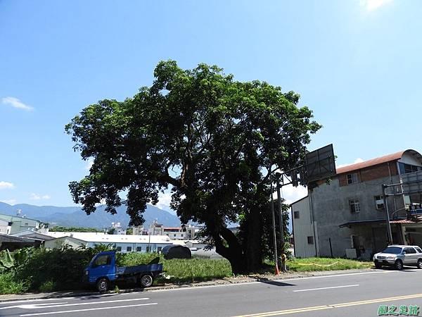 埔里愛蘭老樹20170916(19)