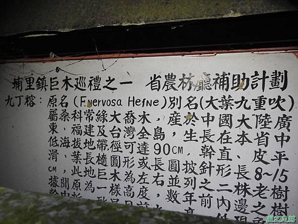 埔里九丁榕20160917(19)